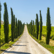 Stock Photo: Umbri- Road with cypresses
