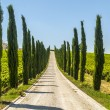 Umbria - Road with cypresses — Stock Photo