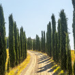 Royalty-Free Stock Photo: Country road with cypresses near Montalcino