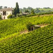 Vineyards of Montalcino (Tuscany) - Stock Photo