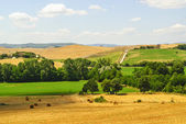 Landscape in Tuscany at summer — Stock Photo