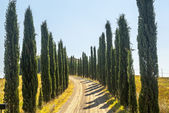 Country road with cypresses near Montalcino — Stock Photo