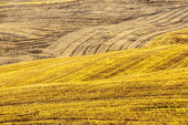 Fields near Montalcino (Tuscany) — Stock Photo