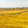 Crete senesi, characteristic landscape in Val d'Orcia — Stock Photo #24069157