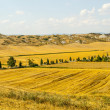 Crete senesi, characteristic landscape in Val d'Orcia — Stock Photo #24069161
