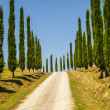 Stock Photo: Crete senesi, characteristic landscape in Val d'Orcia