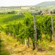 Stock Photo: Tuscany - Chianti vineyards