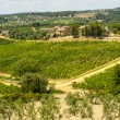Stock Photo: Tuscany - Chianti vineyards and olive trees,