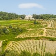 Radda in Chianti - Ancient palace and vineyards — Stock Photo