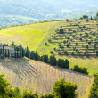Stock Photo: Chianti landscape near Radda, with cypresses and olive trees