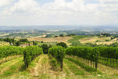 Vineyards near San Gimignano (Siena, Tuscany) — Stock Photo