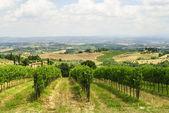 Vineyards near San Gimignano (Siena, Tuscany) — Stock Photo