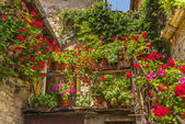 Villa a Sesta (Chianti) - House with plants and flowers — Stock Photo
