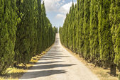 Road with cypresses in Tuscany — Stock Photo