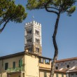 Lucca (Tuscany) - Houses, trees and belfry — Stock Photo
