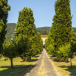 Lucca (Tuscany) - Ancient villa with cypresses — Stock Photo