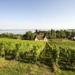 Vineyards in Switzerland — Stock Photo