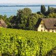 Vineyards in Switzerland — Stock Photo #25579273