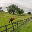 Stockfoto: Vaud (Switzerland) - Horses