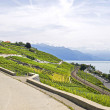 Lake of Geneva (Switzerland) — Stock Photo #25582267
