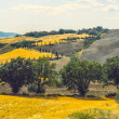 Val d'Orci(Tuscany) — Stock Photo #26283133