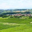 Monferrato (Italy) — Stock Photo