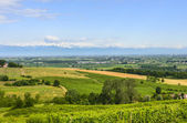 Landscape of Monferrato (Italy) — Stock Photo