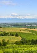 Landscape of Monferrato (Italy) — Stock Photo