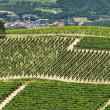 Stock Photo: Langhe, vineyards