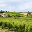 Stock Photo: Monferrato (Italy)