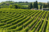 Langhe, vineyards — Stock Photo