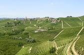 Langhe, vineyards — Stock Photo