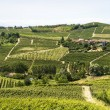 Langhe, vineyards — Stock Photo #31820641