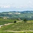 Langhe, vineyards — Stock Photo #31822367