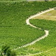 Langhe, vineyards — Stock Photo #31879775