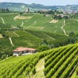 Langhe, vineyards — Stock Photo #31890621