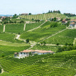 Langhe, vineyards — Stock Photo #31976445