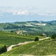Langhe, vineyards — Stock Photo #32126247