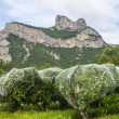 Crocodile shaped rock in France — Stock Photo