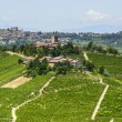 Langhe, vineyards — Stock Photo #32158569