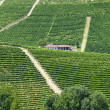 Langhe, vineyards — Stock Photo #32209225