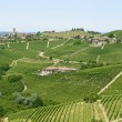 Langhe, vineyards — Stock Photo #32278325