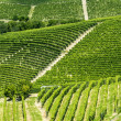 Langhe, vineyards — Stock Photo #32314741