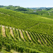 Langhe, vineyards — Stock Photo #32347625
