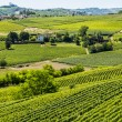 Langhe, vineyards — Stock Photo #32476829