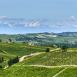 Langhe, vineyards — Stock Photo #32536083