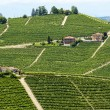 Langhe, vineyards — Stock Photo #32557757