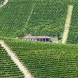 Langhe, vineyards — Stock Photo #32598413
