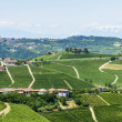 Langhe, vineyards — Stock Photo #32611233