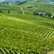 Langhe, vineyards — Stock Photo #32704865